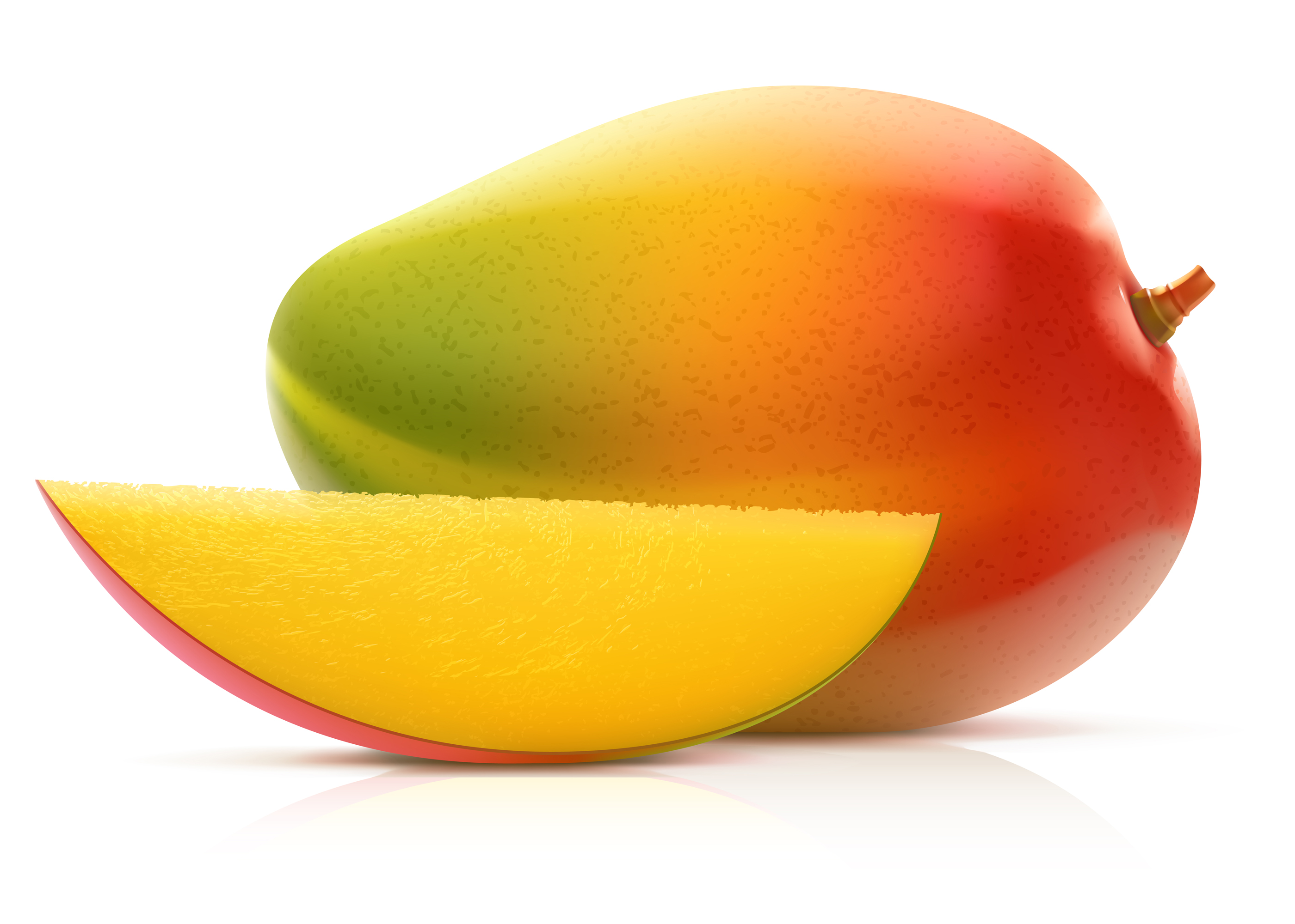 Vector illustration of MANGO fruit